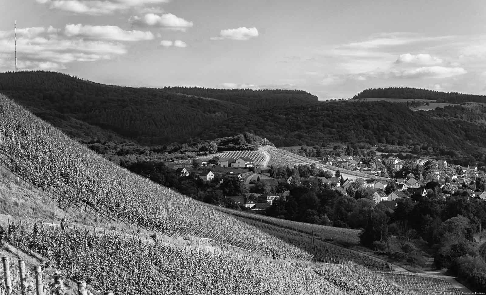 Das Kreuz auf dem Berg stellt das Ende des Weinbergs Wiltinger Gottesfuß dar