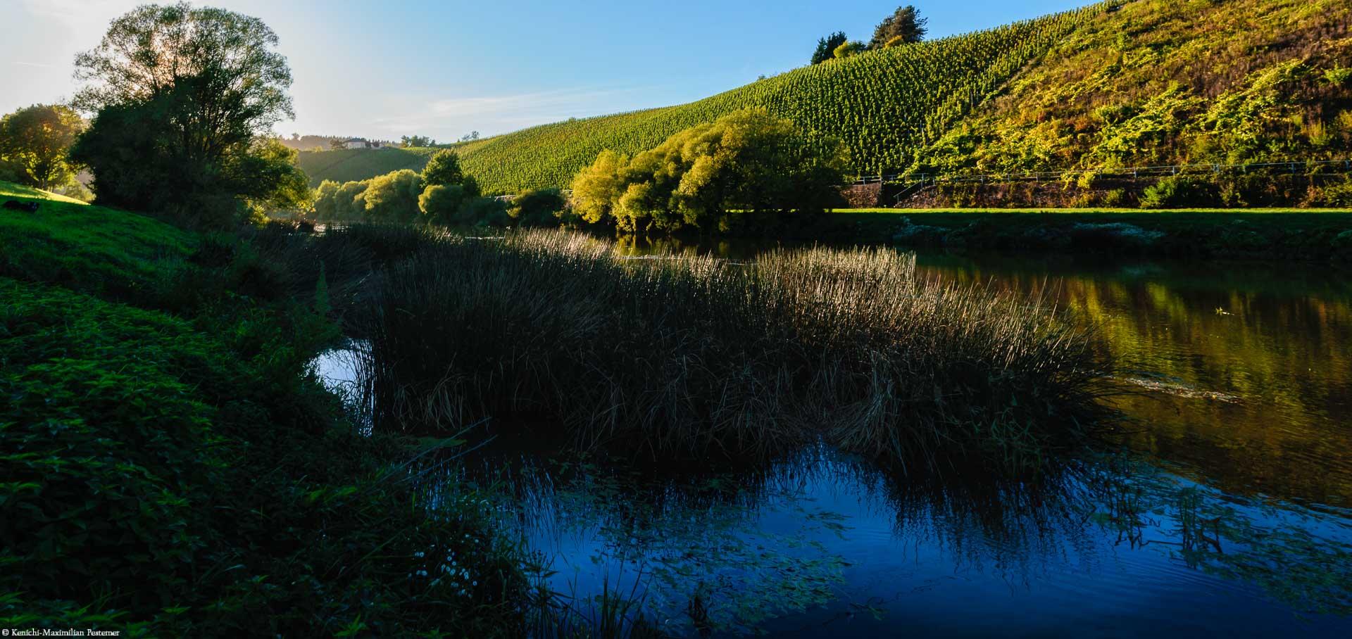 Dieser Weinberg direkt am Fluss gilt als einer der Besseren in der Anbauregion.