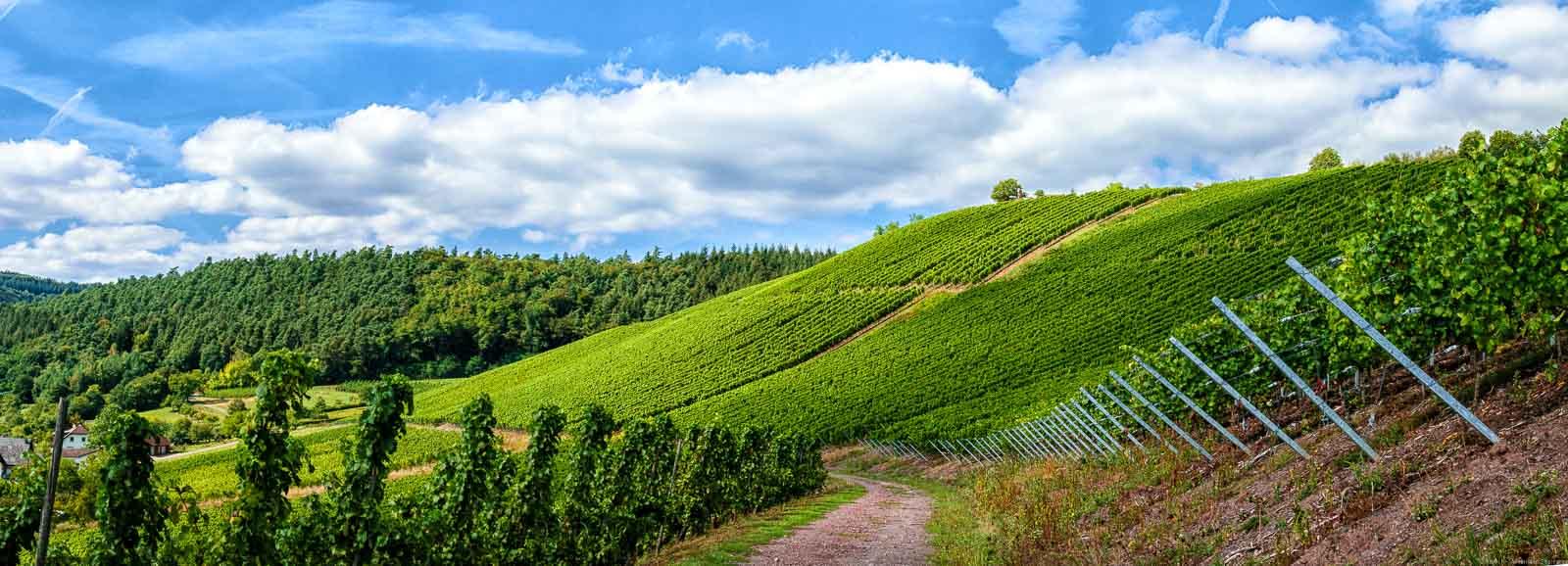Weg in steilem Weinberg Wawerner Goldberg; links einige Häuser und Wald; Wolke am blauen Himmel.