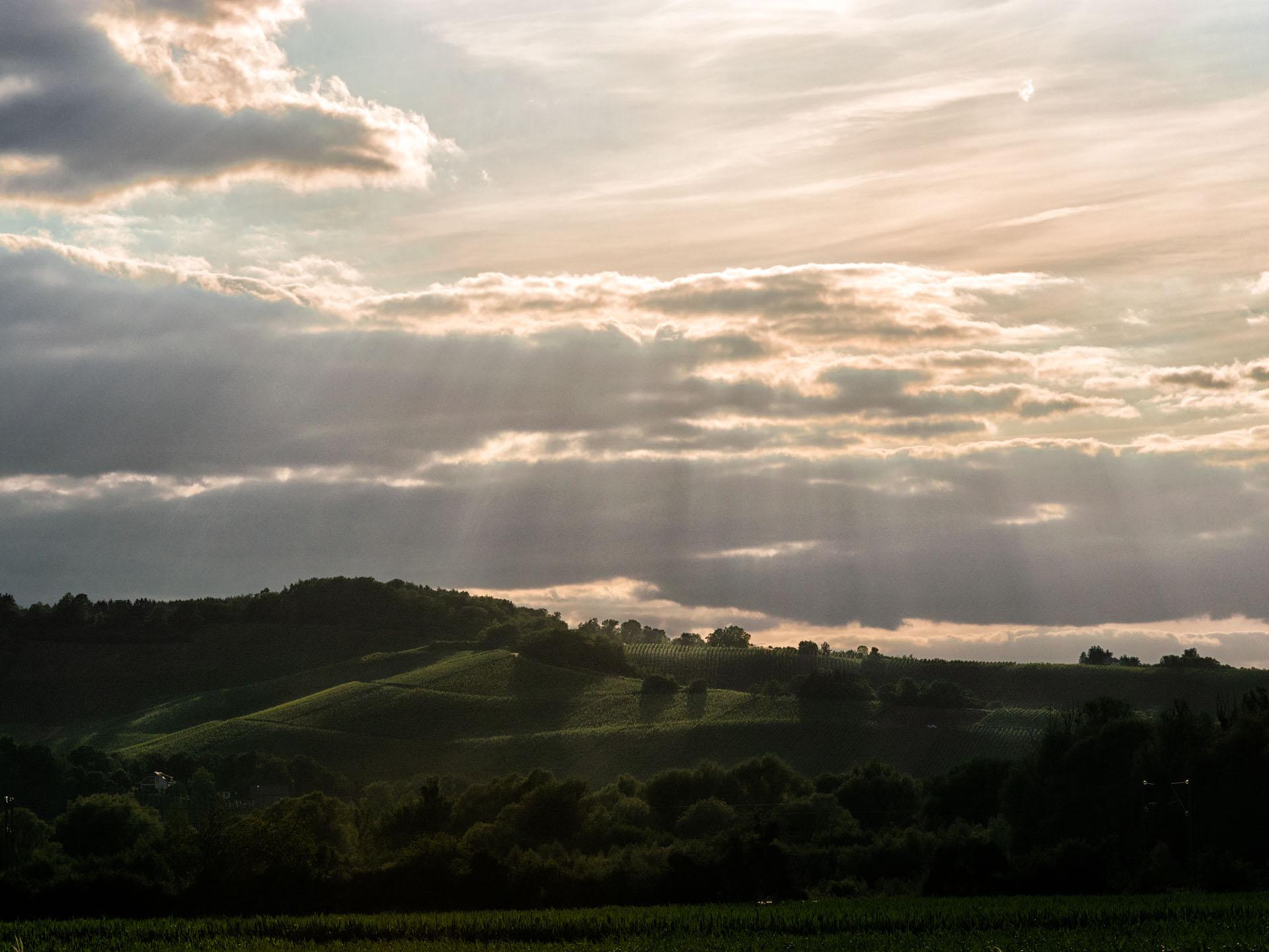Weinberg beim Sonnenuntergang