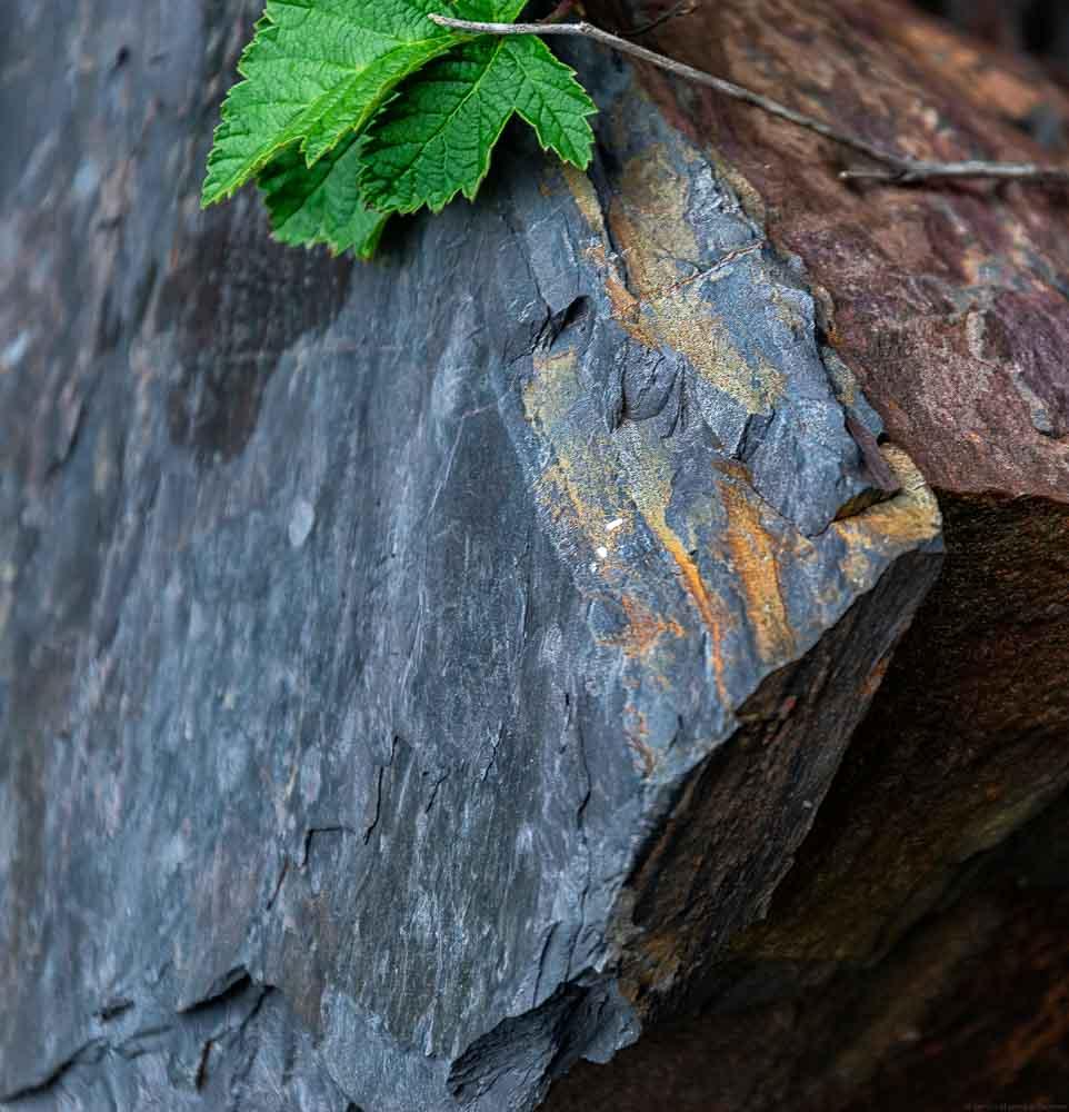 Weinberg Neefer Frauenberg - Mosel Schiefer in blauer, grauer und rötlicher Farbe