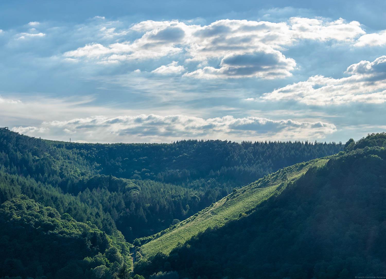 Der Serriger Maximiner Prälat ist ein Steilhang an der Saar auf dem vor allem Riesling angebaut wird