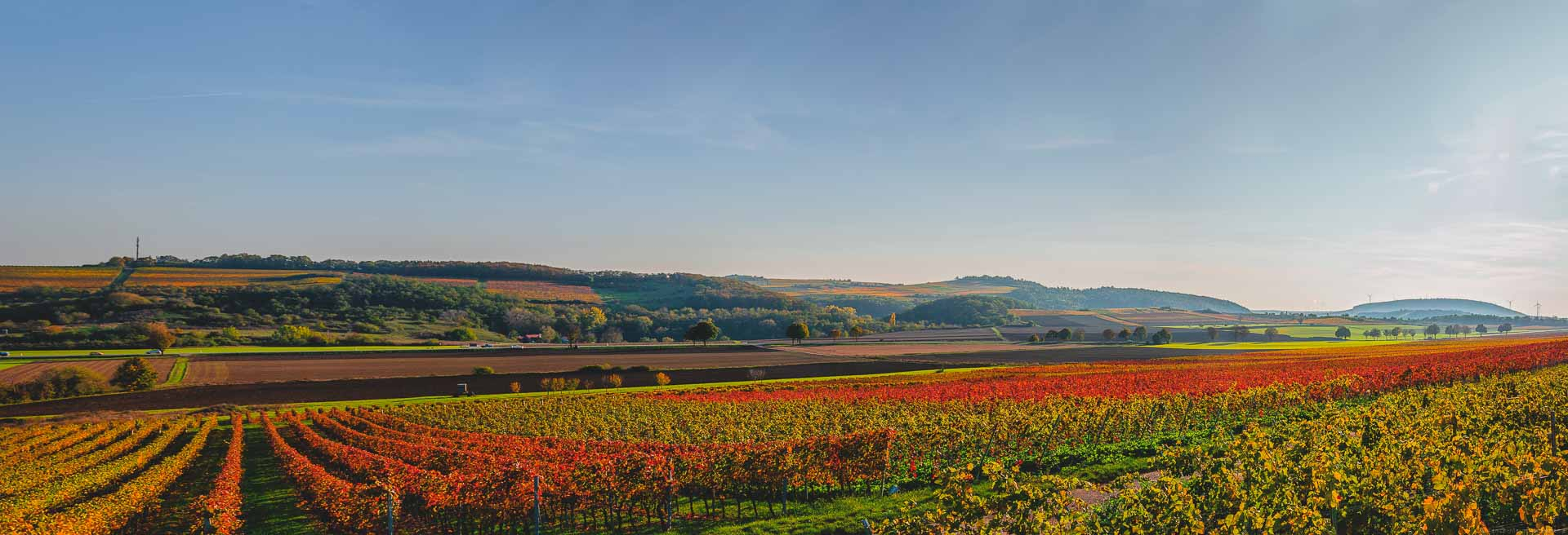 Der Herbst färbt die Weinberge Rheinhessens in allen möglichen Farben ein