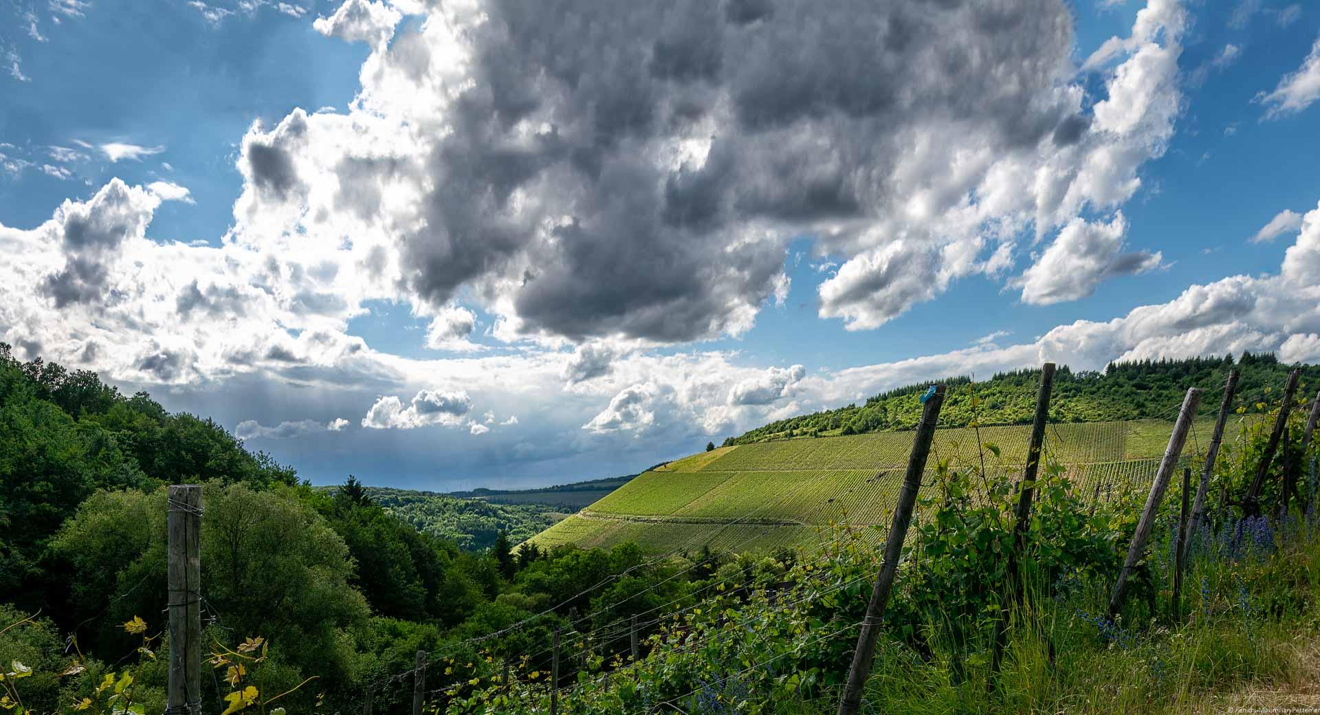Der Weinberg Kaseler Nies'chen wölbt sich imposant neben dem Weindorf Kasel empor. Am blauen Himmel oben erkennt man Wolken. Vorne links ist ein bewaldeter Hügel. Man kann weit in das Ruwertal hineinblicken.