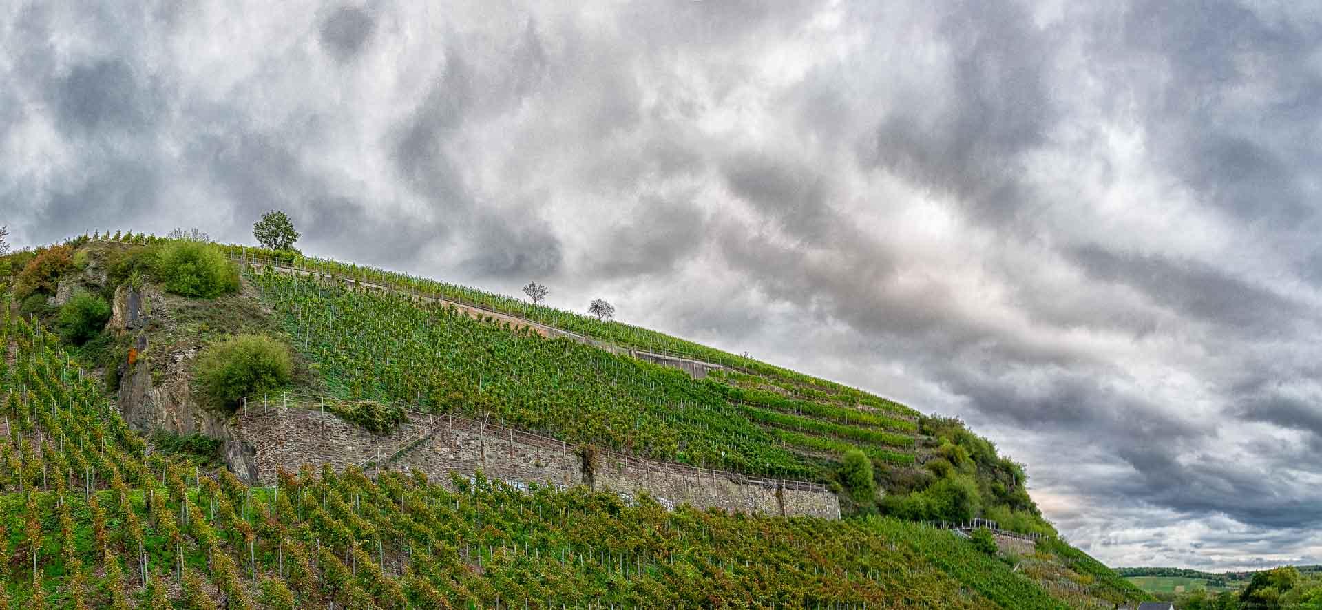 Steiler Weinberg Heimersheimer Landskrone vorne; Wolken am Abendhimmel
