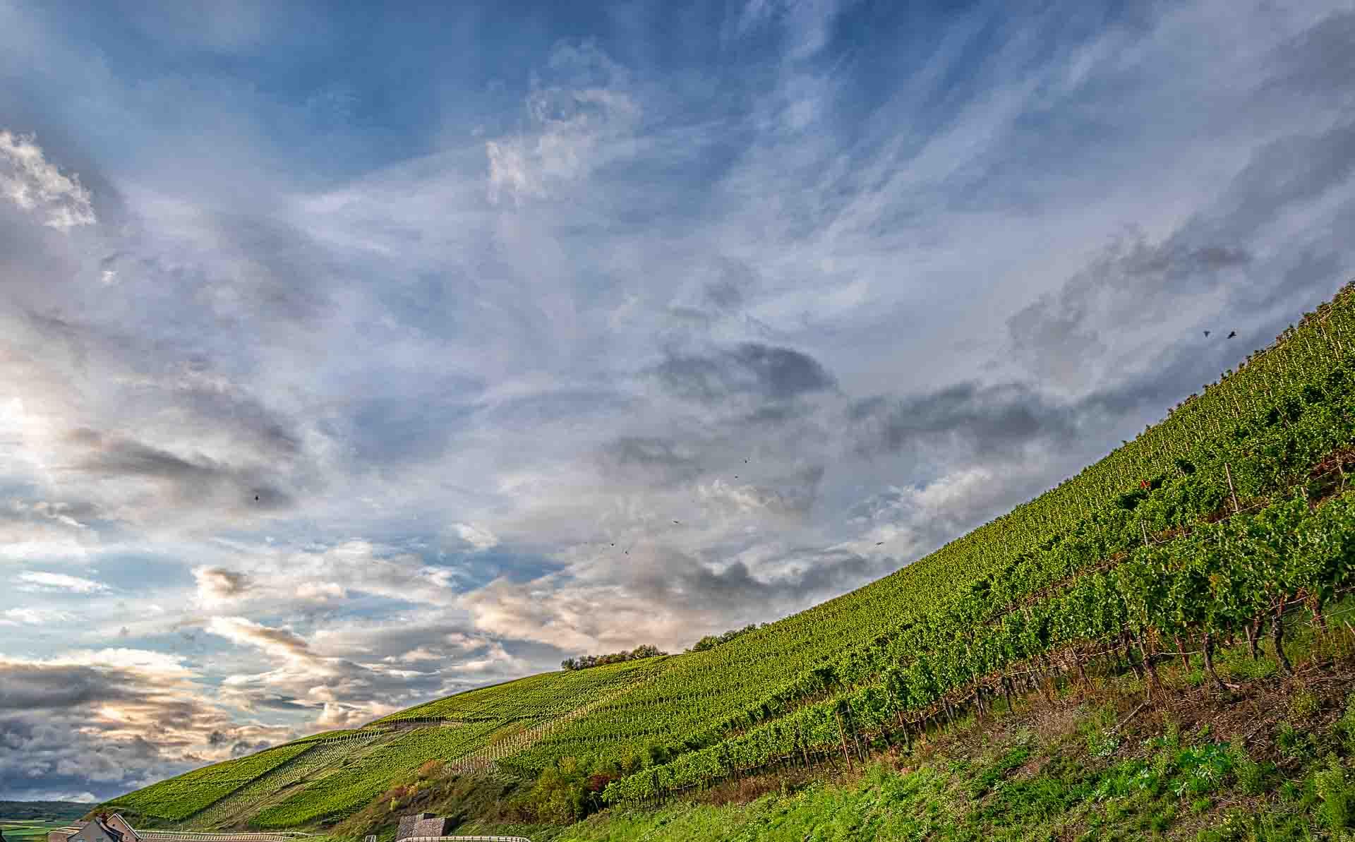 Vorne erkennt man den steiler Weinberg Neuenahrer Sonnenberg unter dem Abendhimmel mit Wolken oben. Es befinden sich Häuser des Ortes Ahrweiler unten links.