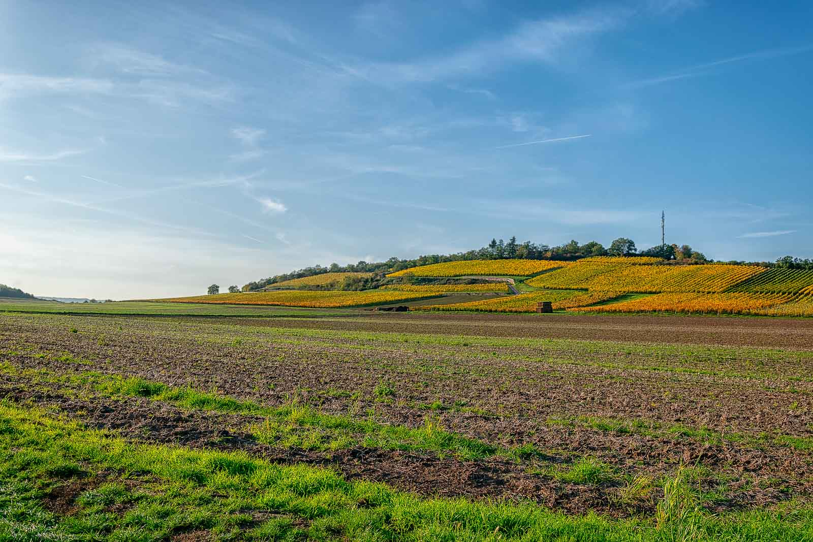 Feld vorne; bunter Weinberg im Herbst dahinter; blauer Himmel oben