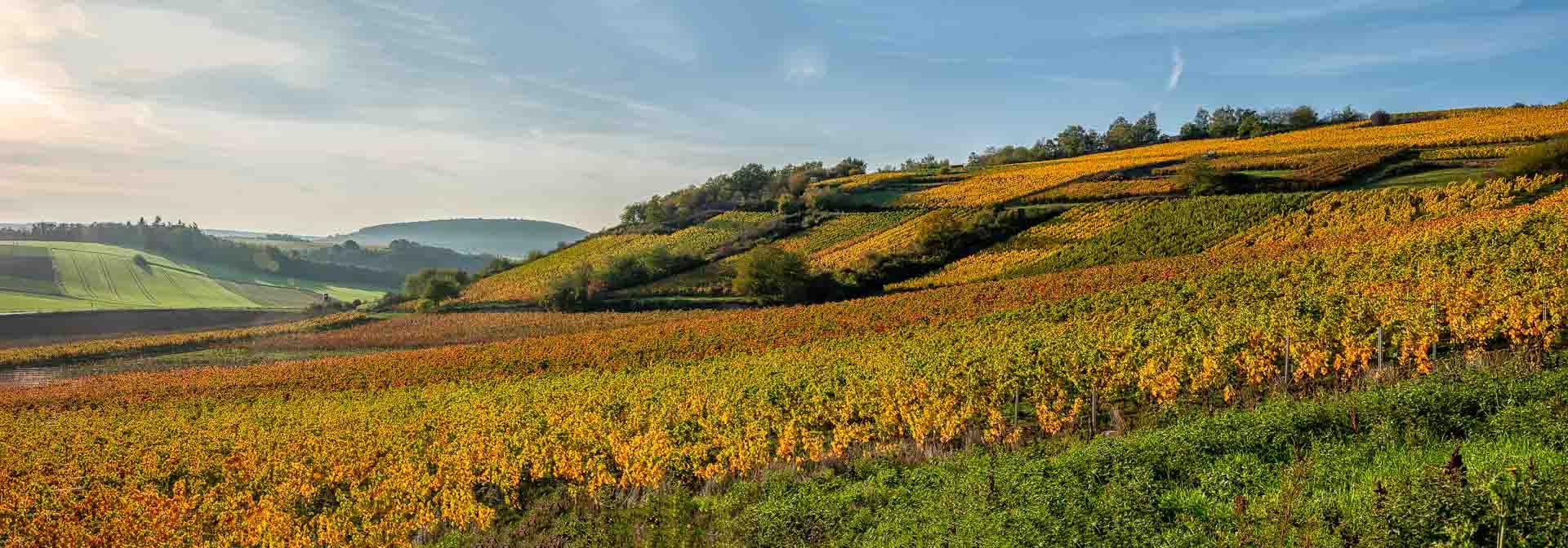 Der Weinberg Siefersheimer Heerkreetz befindet sich in gelb, orange und rot vorne. Die Felder sind links hinten. Hügel mit Wäldern sind im Hintergrund. Der Himmel ist blau.