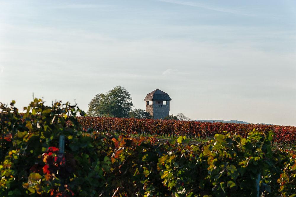 Auf diesem Weinberg in Weinanbaugebiet Rheinhessen steht ein Turm