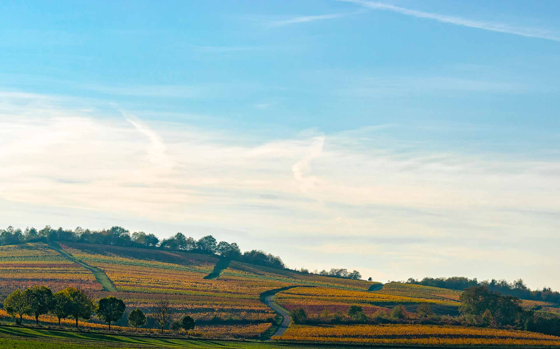 Weinbau Rheinhessen: Wege in gelben, orangenen und Roten Weinbergen; Wolken am Himmel