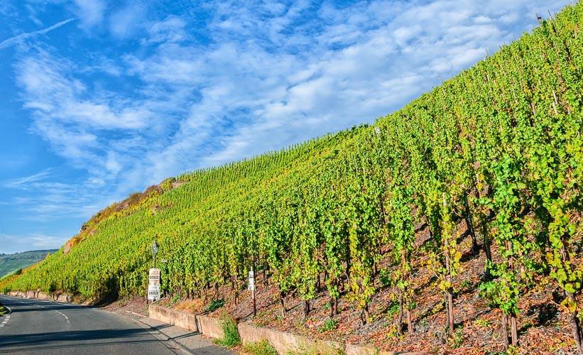 Der Weinberg Bernkasteler Lay befindet sich an einer Straße. Von diesem Weinberg kommen die Bernkasteler Lay Riesling Weine. Am blauen Himmel befinden sich Wolken.