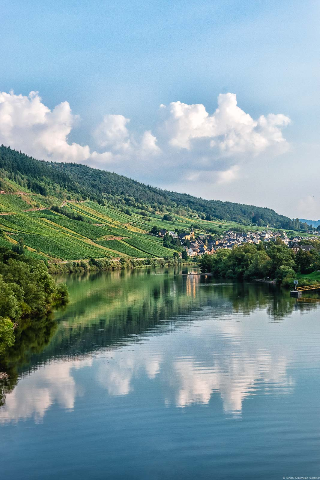 Der Weinberg Burger Hahnenschritten spiegelt sich im Fluss Mosel. Im Hintergrund befindet sich der Ort Burg.