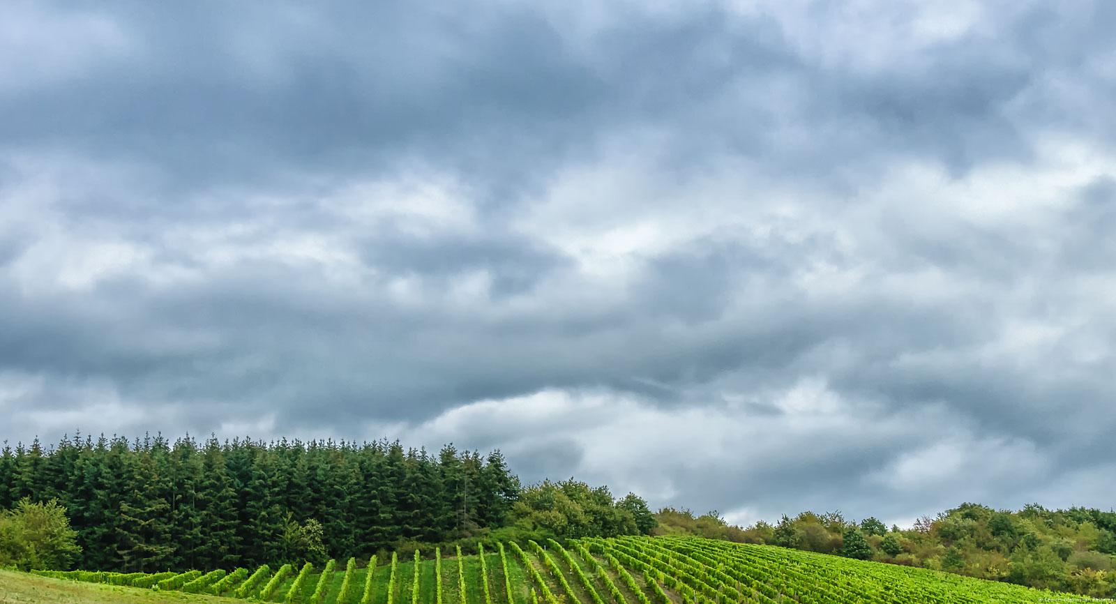 Unten ist der Weinberg. Über dem Weinberg ist Wald. Am Himmel sind Wolken.