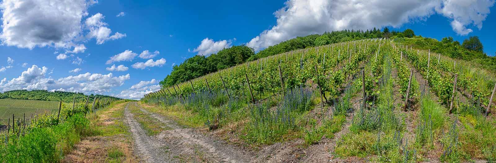Der Kaseler Kehrnagel ist ein steiler Weinberg, der einem einen Ausblick auf den Ort Kasel ermöglicht. Der Himmel ist blau und teilweise bewölkt.
