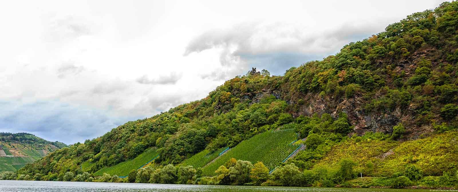 Vorne fließt der Fluss Mose. Dahinter türmt sich der steile Weinberg Kröver Paradies auf. Oberhalb des Weinberges erkennt man Wald, Felsen und eine Ruine. Der Himmel ist bewölkt.