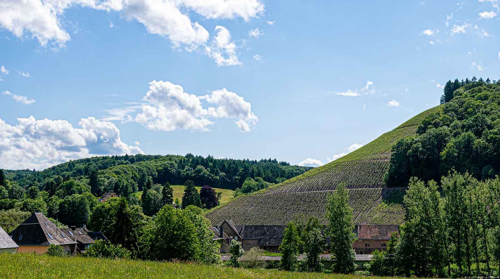 Weinberg Brüderberg hinter Ort umgeben von Wald mit wenigen Wolken am blauen Himmel