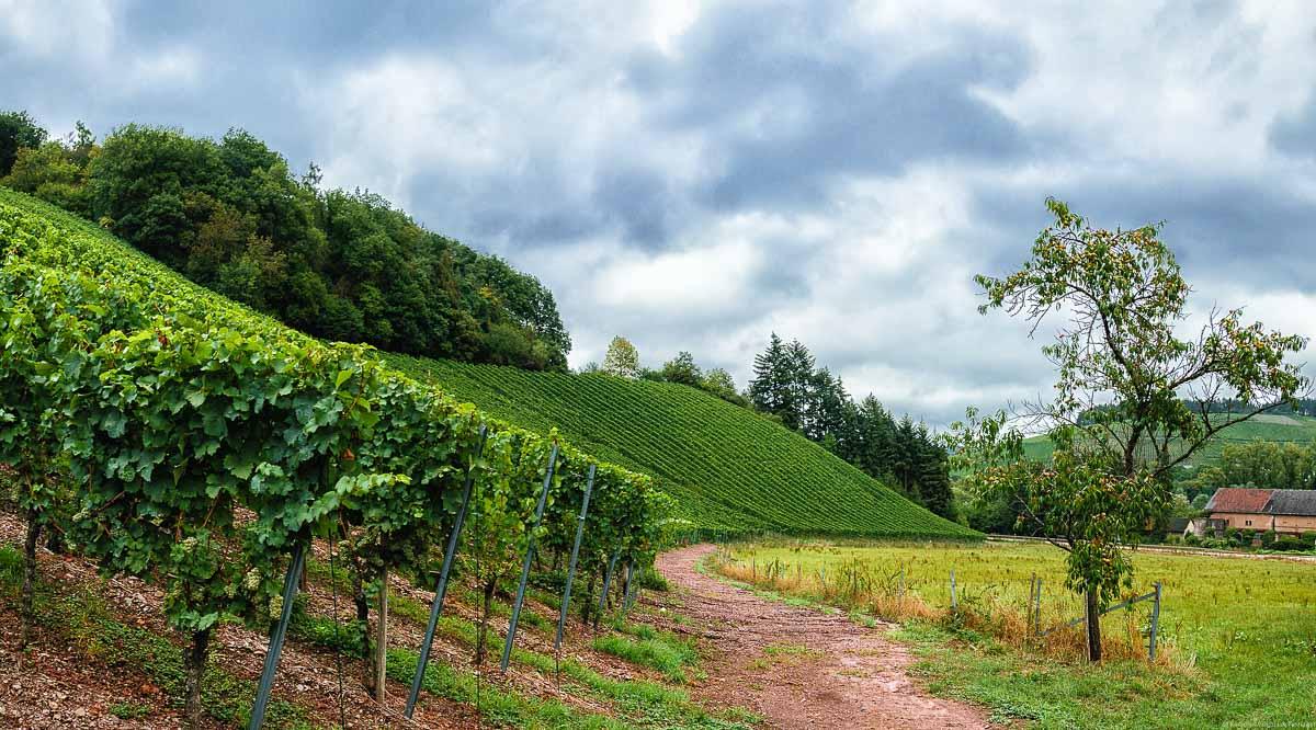 Der Mertesdorfer Brüderberg ist steil, gewölbt und nach Südosten ausgerichtet; Am oberen Hangende ist Wald; bewölkter Himmel oben.