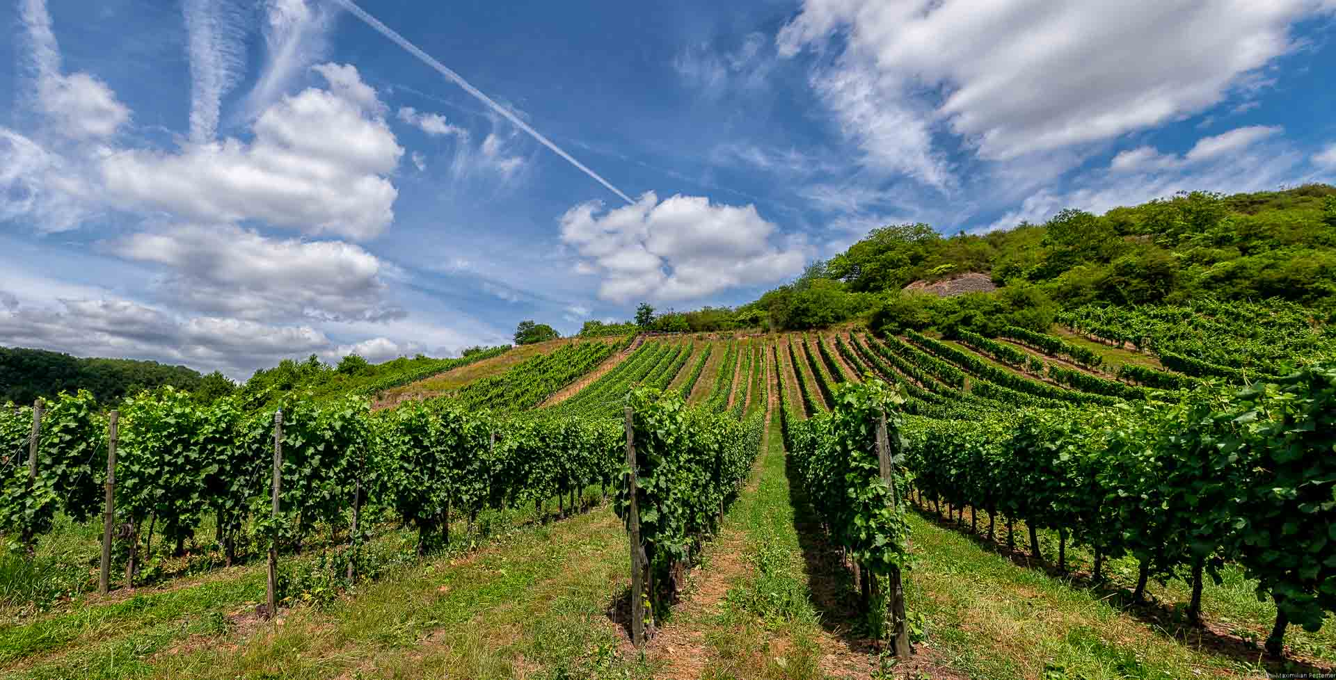 Man blickt auf die Rebzeilen des steilen Mosel-Weinberges Wellener Altenberg. Oben am blauen Himmel erkennt man viele Wolken.
