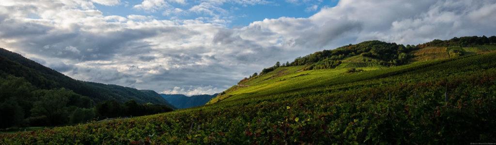 Der Nehrener Römerberg liegt hinter dem Ort Nehren an der Untermosel