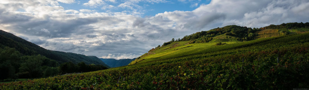 Der Römerberg liegt hinter dem Ort Nehren