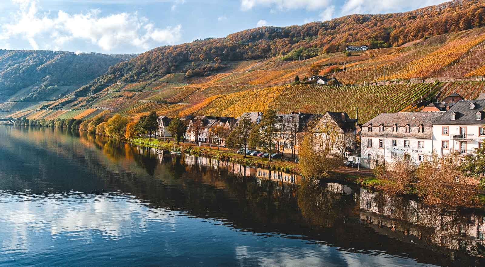 Im Herbst erstrahlen die Weinberge bei Piesport in bunter Pracht, so auch der Weinberg Piesporter Domherr an der Mittelmosel. Vorne links fließt der Fluss Mosel. Am Ufer rechts sind Bäume und Häuser. Am blauen Himmel sind Wolken.