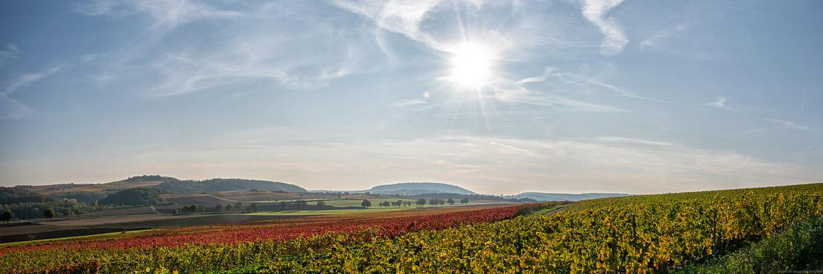 Gefärbte Weinberge in Rheinhessen im Herbst, Felder, blauer Himmel und Sonne