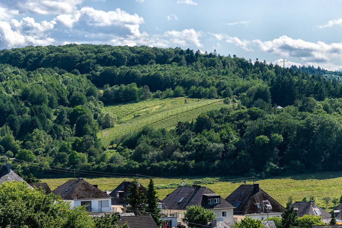 Der Kaseler Timpert ist ein kleiner Weinberg bei Mertesdorf mitten im Wald.