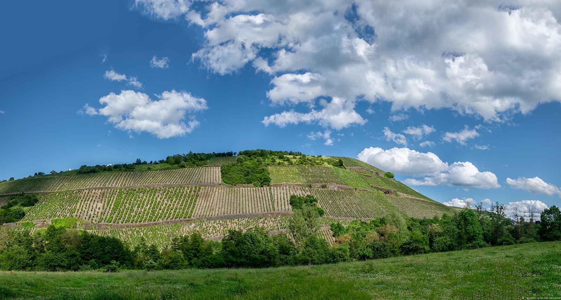 Die Mertesdorfer Lorenzhöfer Felslay ist der mittlere Streifen des Weinbergs auf dem Bild. Vorne ist eine Wiese. Oben ist ein teilweise bewölkter sowie blauer Himmel.