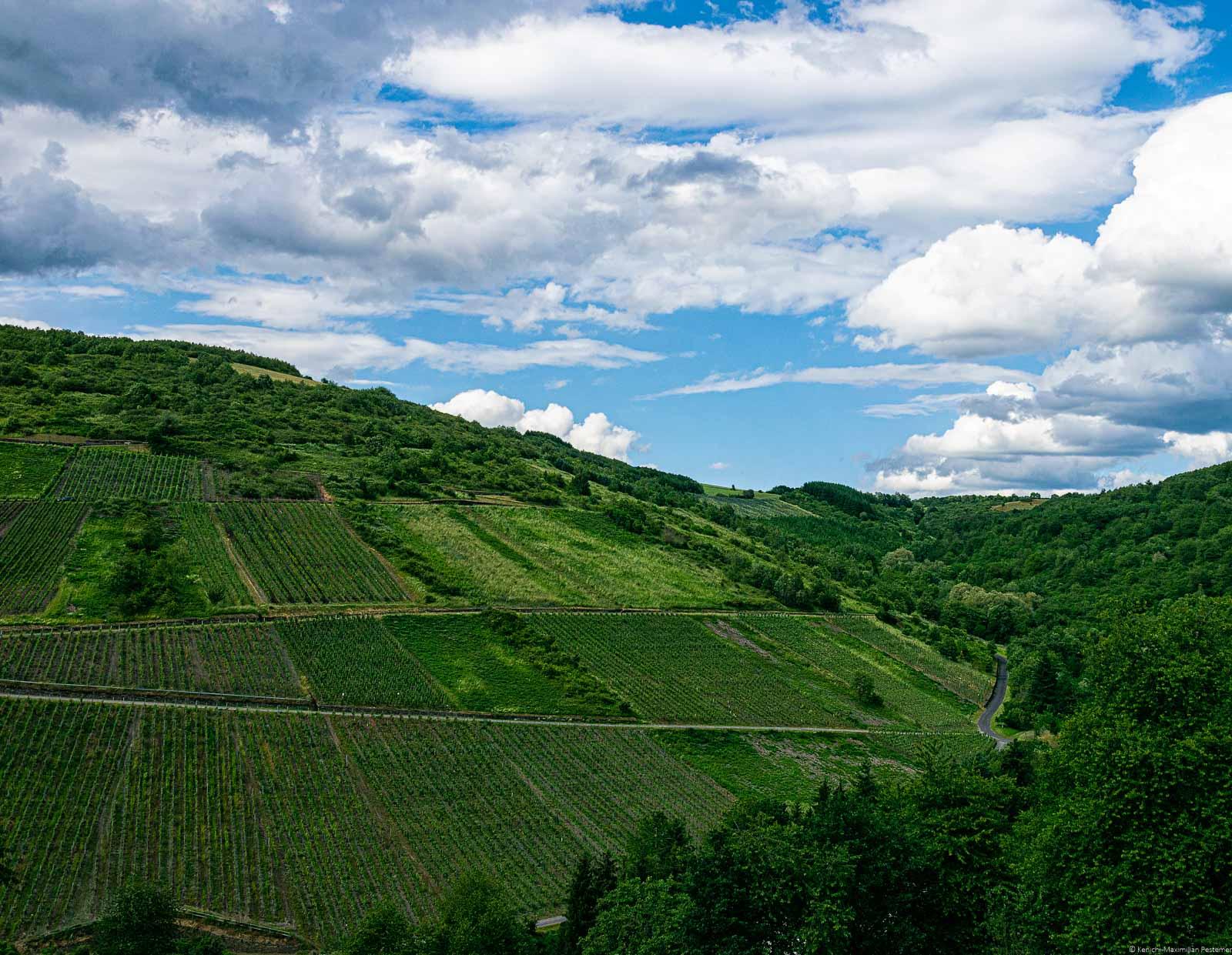 Steiler Weinberg Waldracher Meisenberg links unten; Wald rechts unten; blauer Himmel mit Wolken oben