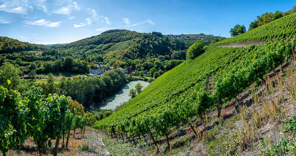 In Sommerau beginnt der Weinanbau an der Ruwer; steiler Hang; Burgruine; Teich; Wälder; Blauer Himmel