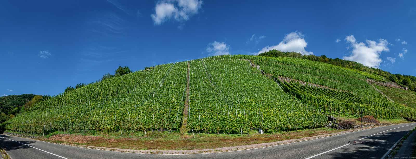 Vorne verläuft eine Straße. Der Weinberg Traben-Trarbacher Hühnerberg befindet sich hinter der Straße in grün und oben ist blauer Himmel.