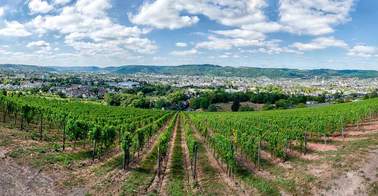 Ausblick über Trierer Stadtzentrum mit Weinberg Trierer Maximiner Hofberg im Vordergrund und Trierer Amphitheater dahinter. Im Hintergrund sind bewaldete Hügel. An blauen Himmel gibt es Wolken.