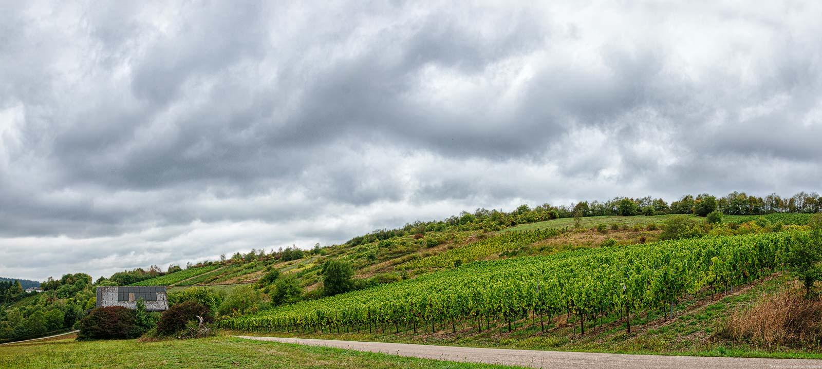 Der Waldracher Ehrenberg befindet sich östlich von Waldrach. Der Weinberg ist flach und der Himmel ist bewölkt.