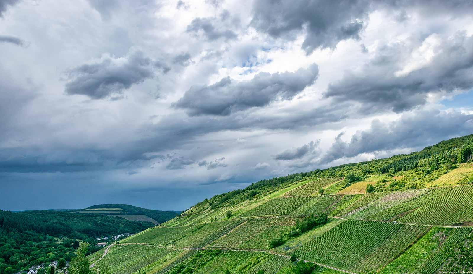Die Ruwer ist ein Seitental der Mosel und bekannt für ihre leichten aromatischen Weine