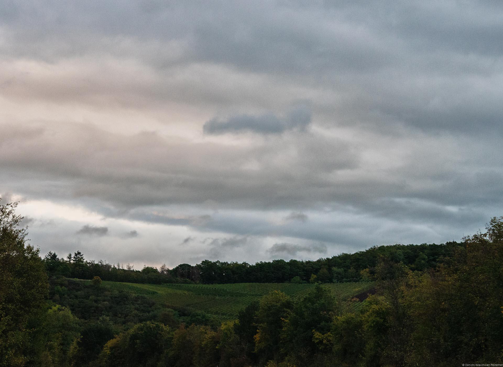 Weinberg Heimersheimer Kapellenberg im steilen Wald beim Sonnenuntergang mit bewölktem Himmel am späten Abend