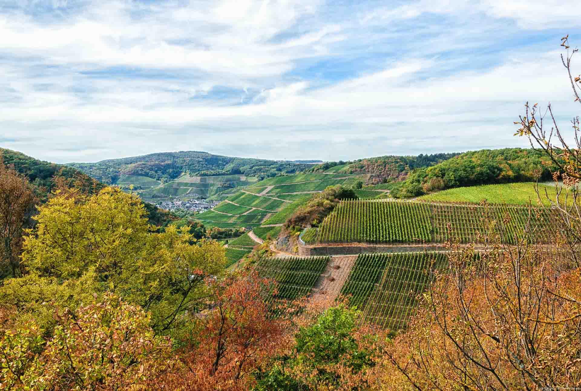 Wald vorne, Herbst, Weinberg Marienthaler Rosenberg