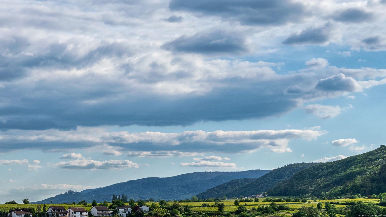 Weinberg Deidesheimer Reiterpfad in der Pfalz mit Bergen, Wald und Wolken