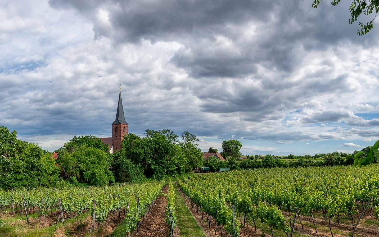 Weinberg Forster Kirchenstück, Bäume, Kirche und bewölkter Himmel