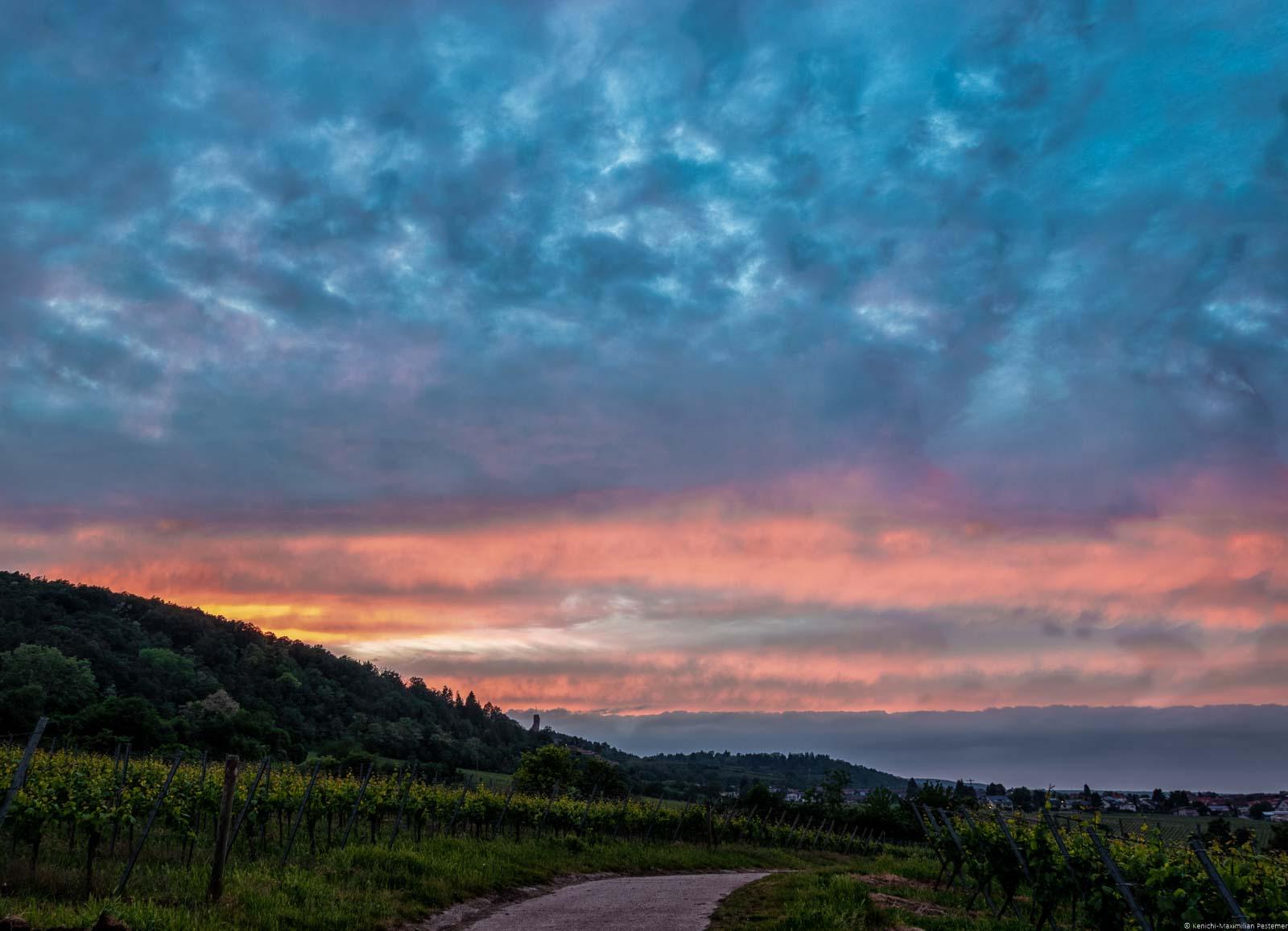 Sonnenuntergang am Forster Pechstein, Hügel und Burgturm der Wachtenburg. Die Rebstöcke auf dem Bild im Vordergrund dienen dazu einige der besten Pfalz-Weine herzustellen.