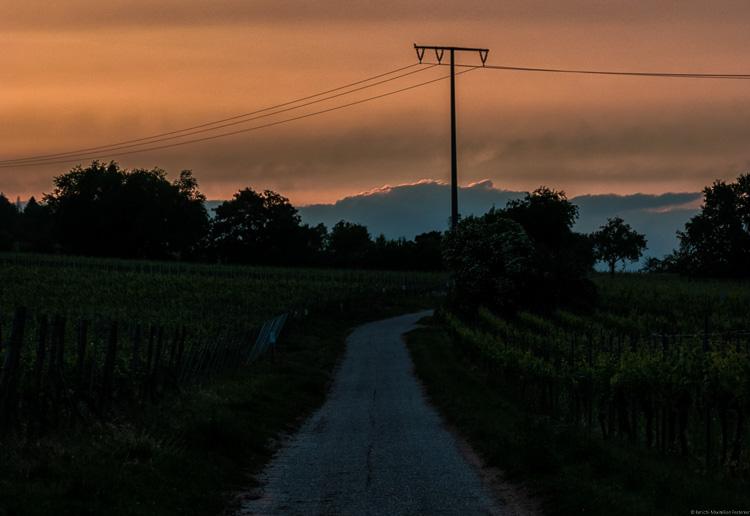 Weg in Weinberg Forster Ungeheuer in Pfalz mit Strommast, Sonnenuntergang, oranger Himmel, blaue Wolken, Bäume