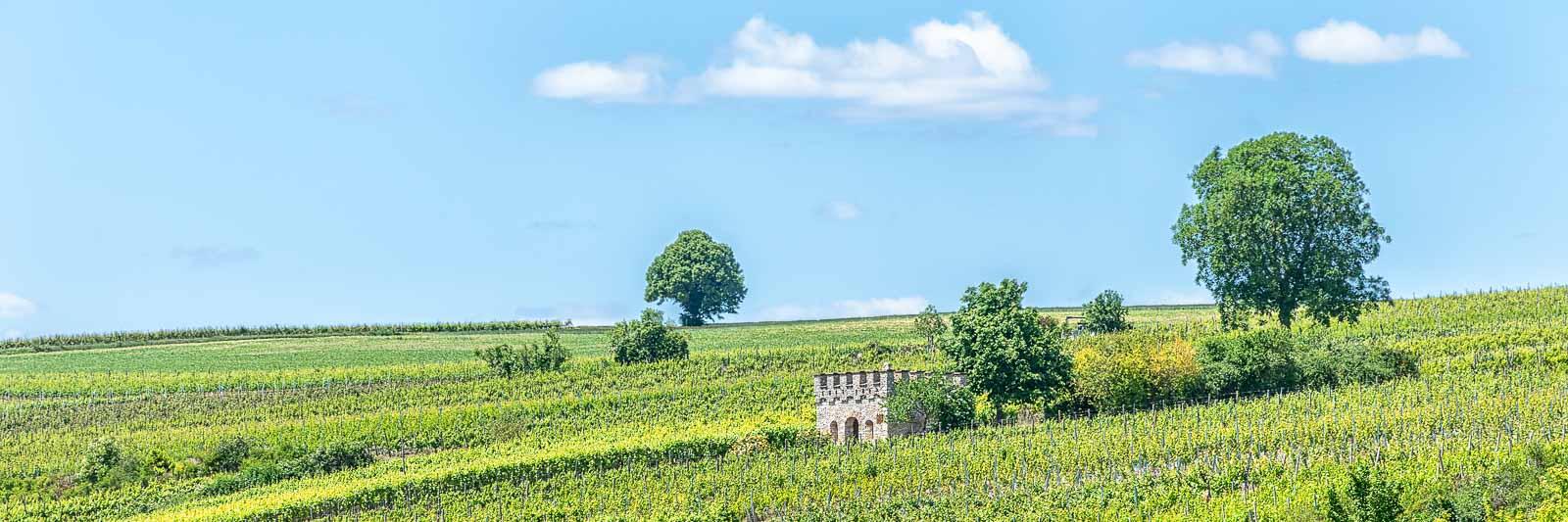 Turm im Weinberg Klosterstück in der Pfalz, blauer Himmel mit einigen Wolken