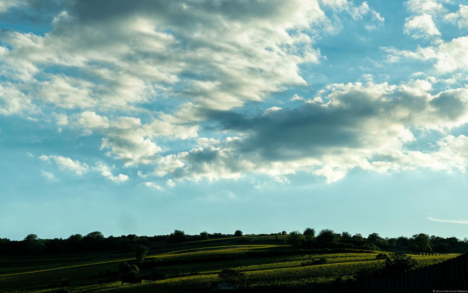 Weinberg Sausenheimer Honigsack beim Sonnenuntergang am frühen Abend. Am blauen Himmel der Weinregion Pfalz sind Wolken. Man erkennt einige Bäume auf dem Weinberg von dem bekannte Pfälzer Weine kommen.
