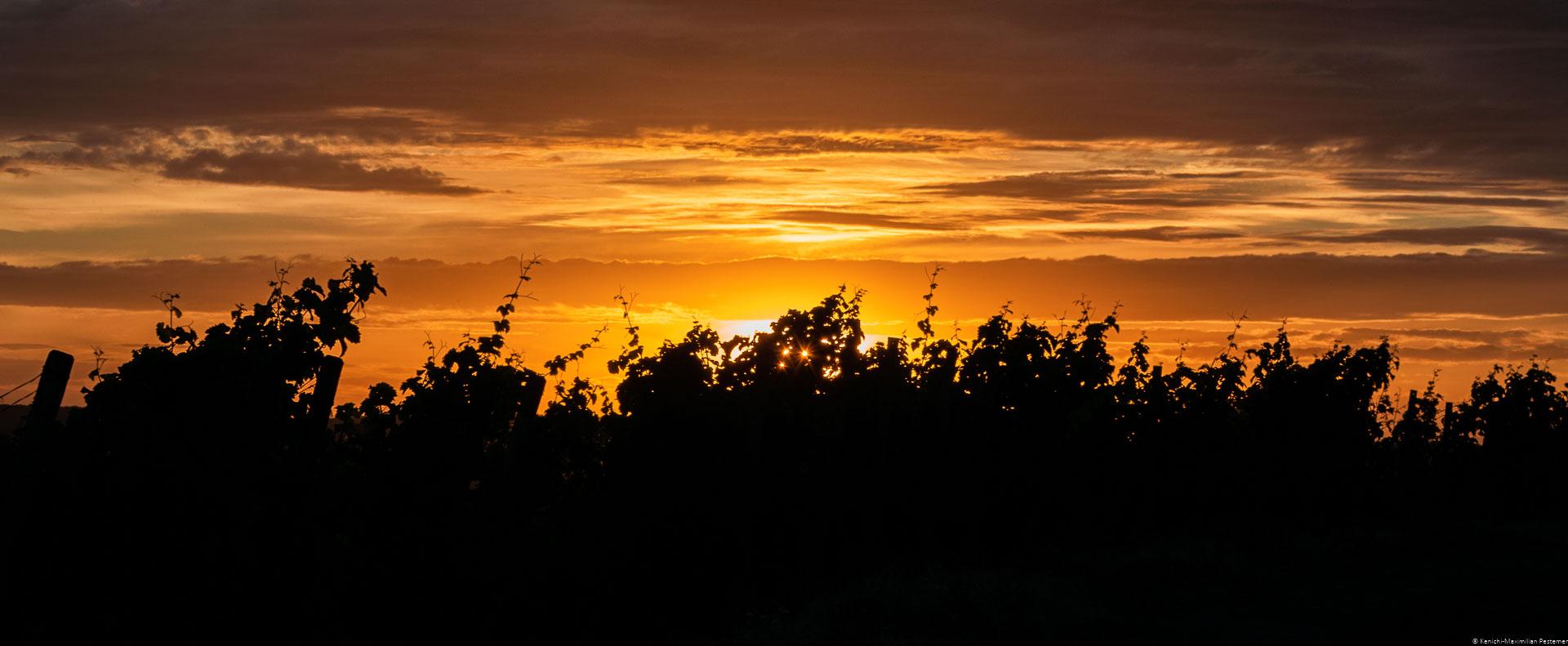 Rebsorten Riesling; Schwarze Silhouette der Reben; Orangener rötlicher Himmel; Wolken; Sonnenuntergang am Wiltinger Braunfels in der Vols