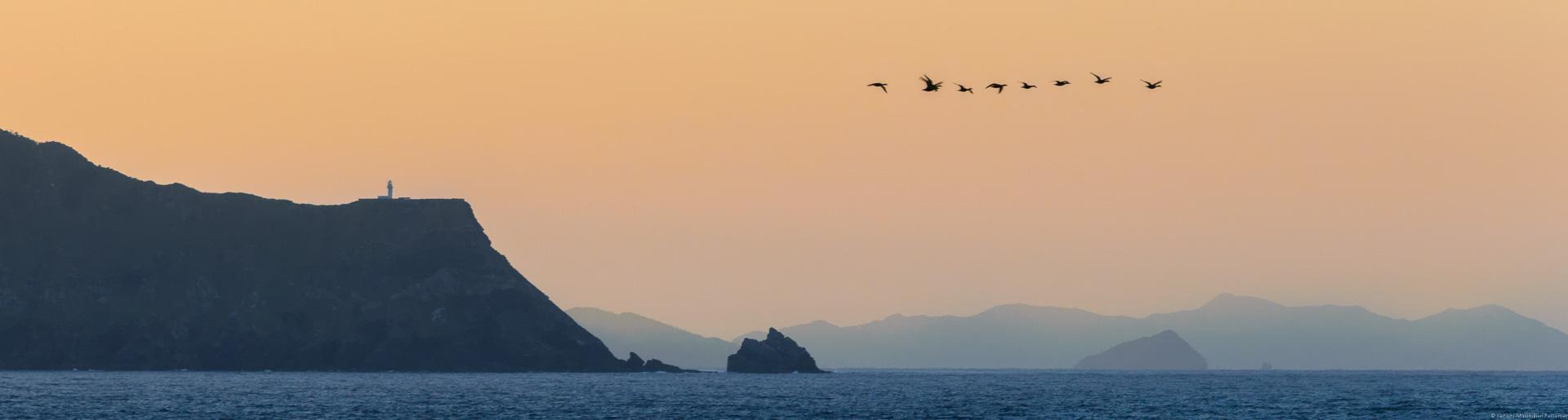 Küstenfelsen; Südjapan; Vögel; Flug; Sonnenaufgang; Titelbild von Richard Pestemers Wein-Haikus auf Vinaet