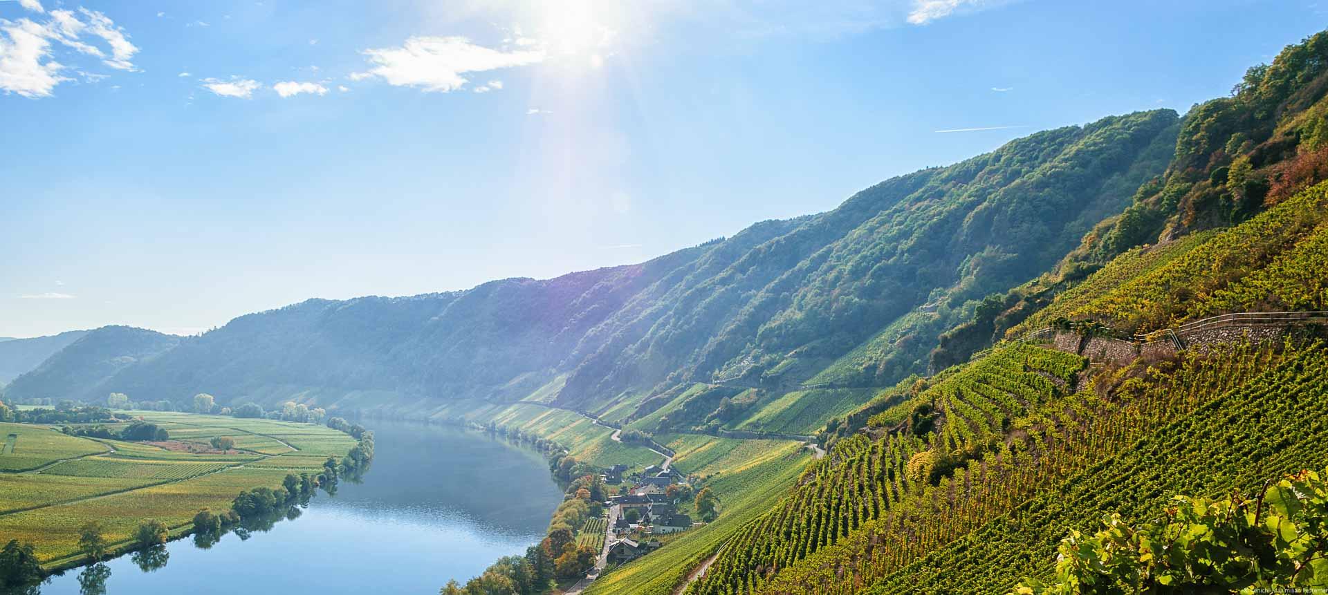Links fließt der Fluss Mosel. Am linken Ufer sind bunte flache Weinberge im Herbst. Am rechten Ufer liegt der Ort Ferres. Am rechten Ufer sind steile Weinberge. Mitten darin liegt der Weinberg Piesporter Schubertslay. Im Hintergrund sind Wälder am rechten Ufer. Die Sonne scheint am blauen Himmel.