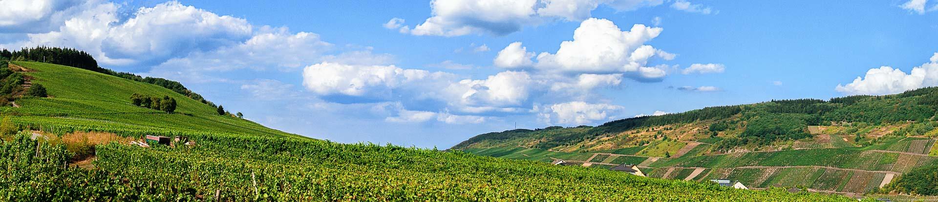Vorne befindet sich der flache Bereich des Pölicher Held. Hinten rechts sieht man den steilen Bereich des Weinbergs. Oben links sind einige Bäume. Am blauen Himmel sind Wolken.