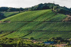 Vorne befindet sich Wald. Dahinter liegen zwei Häuser. Hinter den Häusern türmt sich der Weinberg auf. Von diesem Weinberg kommt der Wein Wawerner Jesuitenberg Riesling trocken. Am Rand des Hanges oben ist Wald. Der Himmel ist bewölkt.