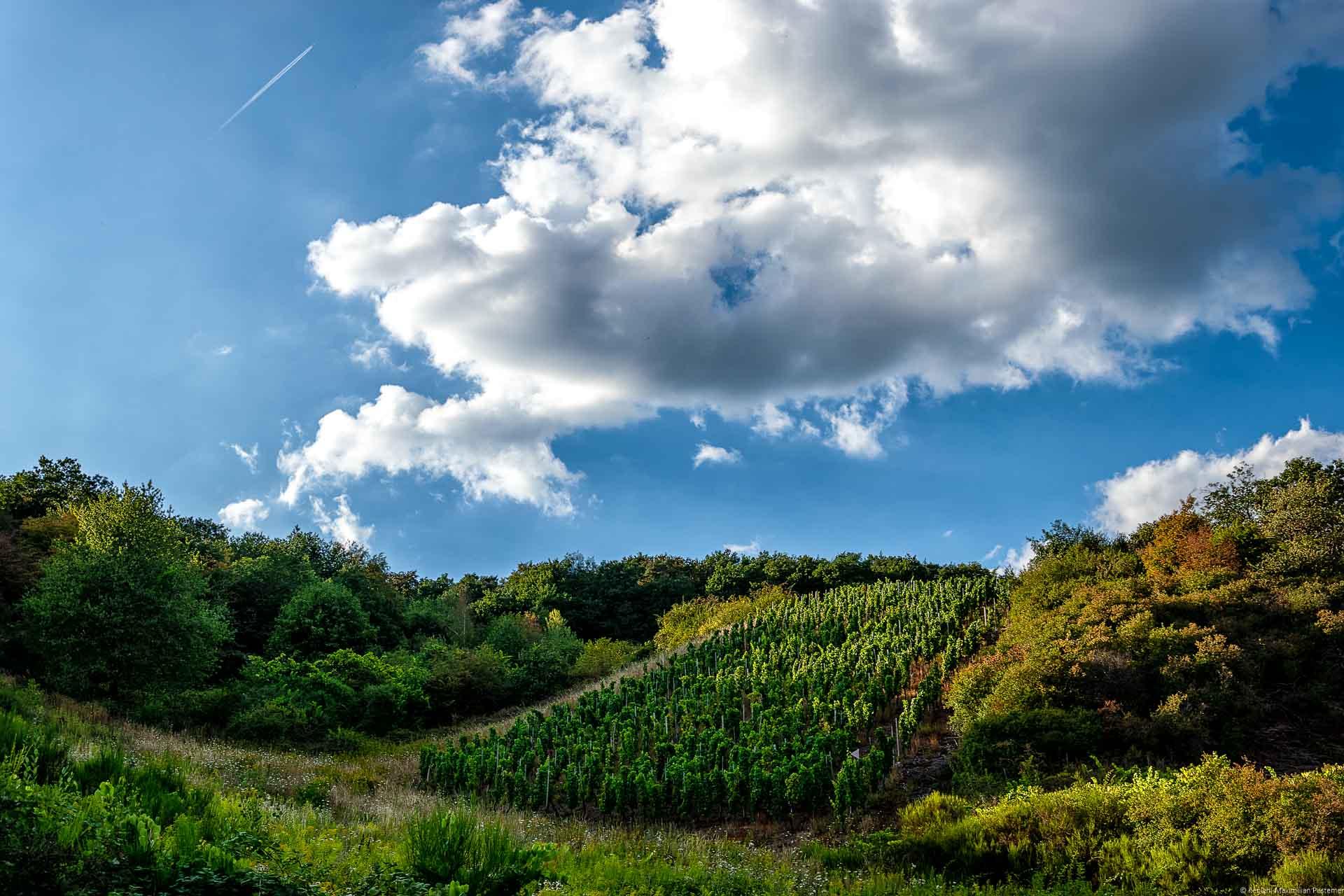 Der Weinberg Wiltinger Schlangengraben mit, Parzelle aus alten Reben von 1920 ist umgeben von Wald und Wiesen. Ein Wolke ist am blauen Himmel.
