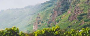 Der Weinberg Erdener Prälat an der Mosel mit roten Felsen im Weinberg
