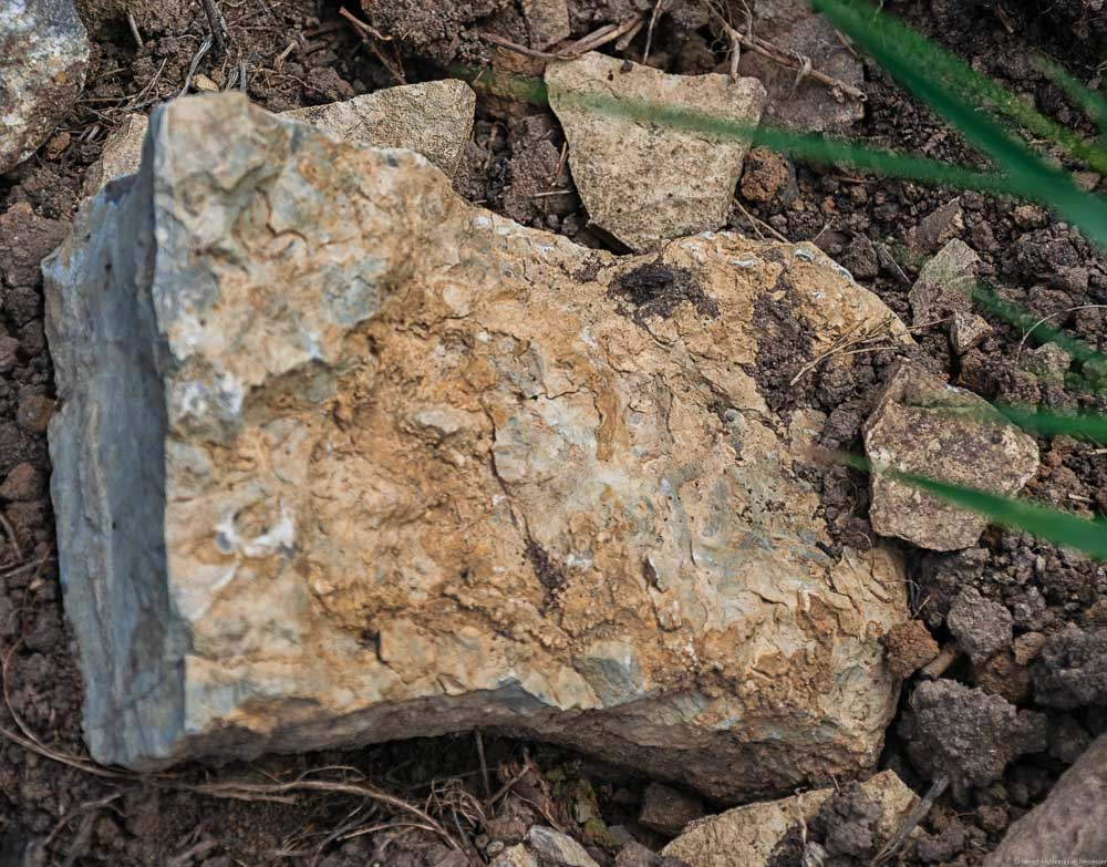 Diese Muschelkalk-Gestein stammt aus der Südpfalz bei Wissembourg und Rechten-Schweigen